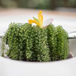 Food don't taste bad on the other side: Wujie, a mind-blowing vegetarian restaurant in Shanghai